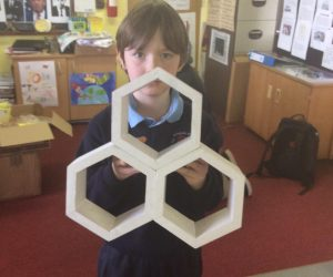 The hexagonal shaped honeycomb cells
